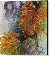 Grapes Iv Canvas Print by Judy Dodds