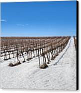 Grapevines In Snow Canvas Print