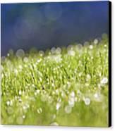 Grass, Close-up Canvas Print by Tony Cordoza