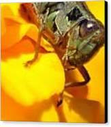 Grasshopper On Yellow Canvas Print by Maureen  McDonald