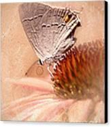 Gray Hairstreak Butterfly Canvas Print by Betty LaRue