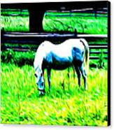 Grazing Horse Canvas Print by Bill Cannon