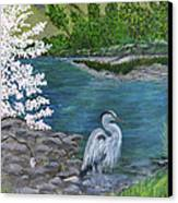 Great Blue Heron Canvas Print by Judy M Watts-Rohanna