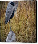 Great Blue Heron On Spool Canvas Print by Debra and Dave Vanderlaan