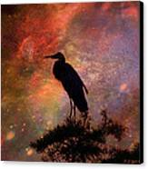 Great Blue Heron Viewing The Cosmos Canvas Print