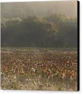 Great Meadows National Wildlife Refuge Blue Heron Fog Canvas Print