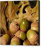 Green Acorns And Oak Leaves Canvas Print by Jennifer Holcombe