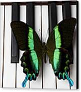 Green And Black Butterfly On Piano Keys Canvas Print