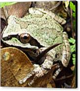 Green And Brown Frog Canvas Print