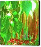 Green Curtain Canvas Print by Juliana  Blessington
