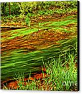 Green Forest River Canvas Print