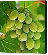 Green Grape And Vine Leaves Canvas Print by Sami Sarkis