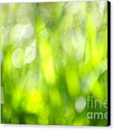 Green Grass In Sunshine Canvas Print by Elena Elisseeva