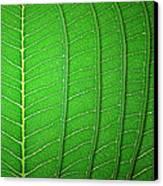 Green Leaf Texture Canvas Print