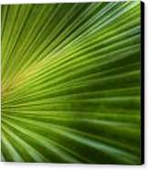 Green Palm Canvas Print by Al Hurley