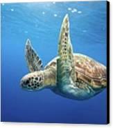 Green Sea Turtle Canvas Print by James R.D. Scott