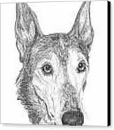 Greyhound Canvas Print by Deb Gardner