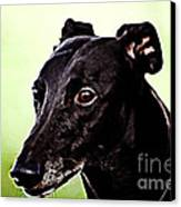 Greyhound Canvas Print by The DigArtisT
