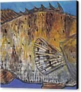 Grouper Canvas Print by Edward Walsh