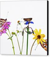 Gulf Fritillary And Brown Skipper Canvas Print by Jim McKinley
