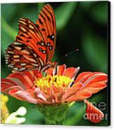 Gulf Fritillary On Zinnia Canvas Print by Kelly Rader