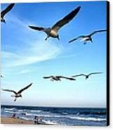 Gulls Canvas Print by John Loreaux