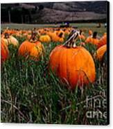 Halloween Pumpkin Patch 7d8405 Canvas Print