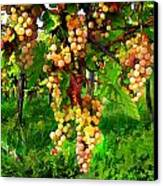 Hanging Grapes On The Vine Canvas Print by Elaine Plesser