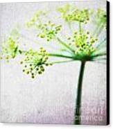 Harvest Starburst 2 Canvas Print by Linda Woods
