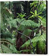 Hawaiian Rainforest Canvas Print