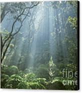 Hawaiian Rainforest Canvas Print by Gregory Dimijian MD