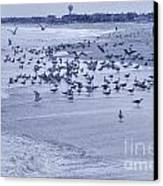 Hdr Seagulls At Play In The Sand Canvas Print by Pictures HDR