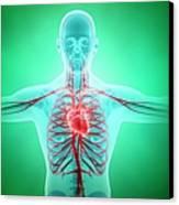 Healthy Cardiovascular System, Artwork Canvas Print