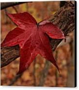 Hello Red Canvas Print by Bob Whitt