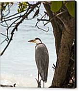 Heron Canvas Print by Jane Rix