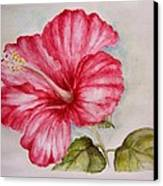 Hibiscus Flower Canvas Print by Draia Coralia