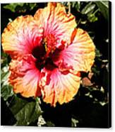 Hibiscus Flower Canvas Print by Lisa Phillips