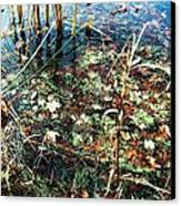 Homage To Monet Canvas Print by Todd Sherlock
