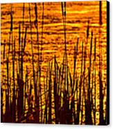 Horicon Cattail Marsh Wisconsin Canvas Print by Steve Gadomski
