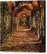 Hornbeam Alles, Birr Castle, Co Offaly Canvas Print