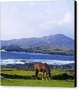 Horse Grazing In A Field, Beara Canvas Print by The Irish Image Collection