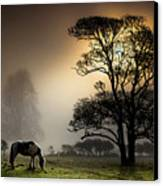 Horse Grazing In Field Canvas Print by Land and Light