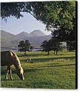 Horse Grazing On A Landscape Canvas Print by The Irish Image Collection