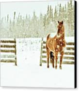 Horse In A Snowstorm Canvas Print by Roberta Murray - Uncommon Depth