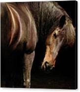 Horse Looking Over Shoulder Canvas Print by Anne Louise MacDonald of Hug a Horse Farm