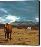 Horses In Winter Landscape  Truchas, New Mexico Canvas Print by Mary Hockenbery