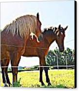 Horses Canvas Print by Jenny Senra Pampin