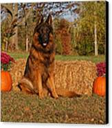 Hoss In Autumn II Canvas Print