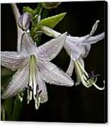Hosta Front And Center Canvas Print by Michael Putnam