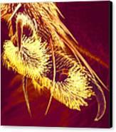 Hover Fly Foot, Sem Canvas Print by Susumu Nishinaga
